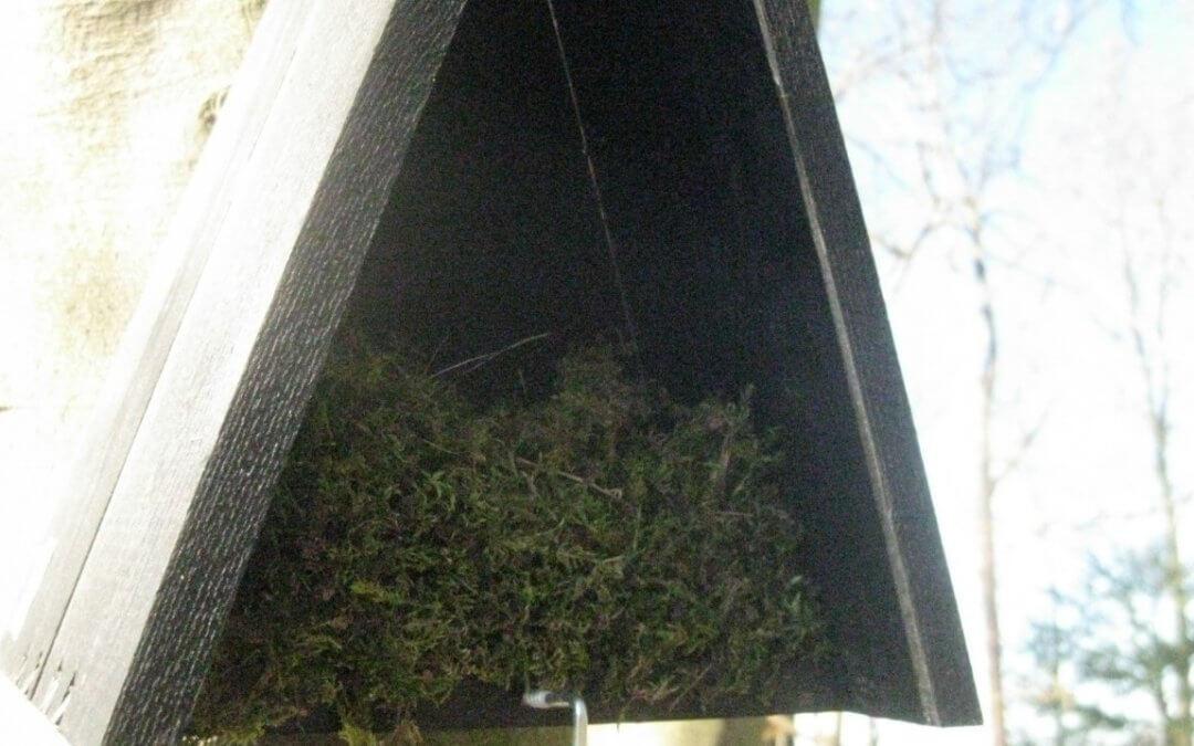 Mezen trekken in de nestkastjes